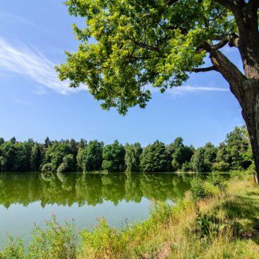 Rybník Stolec, Třeboňsko